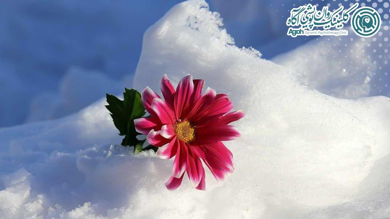 گل بهاری